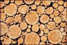 Brandhout: welke wordt het meeste gebruikt?
