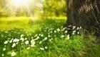 Voorjaarsgevoel voor de kachel liefhebbers! Waarom is de kachel bijzonder waardevol tijdens de overgangsperiode?